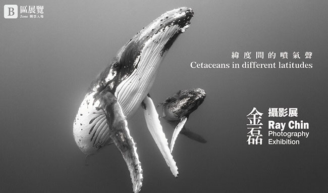 緯度間的噴氣聲 Cetaceans in different latitudes