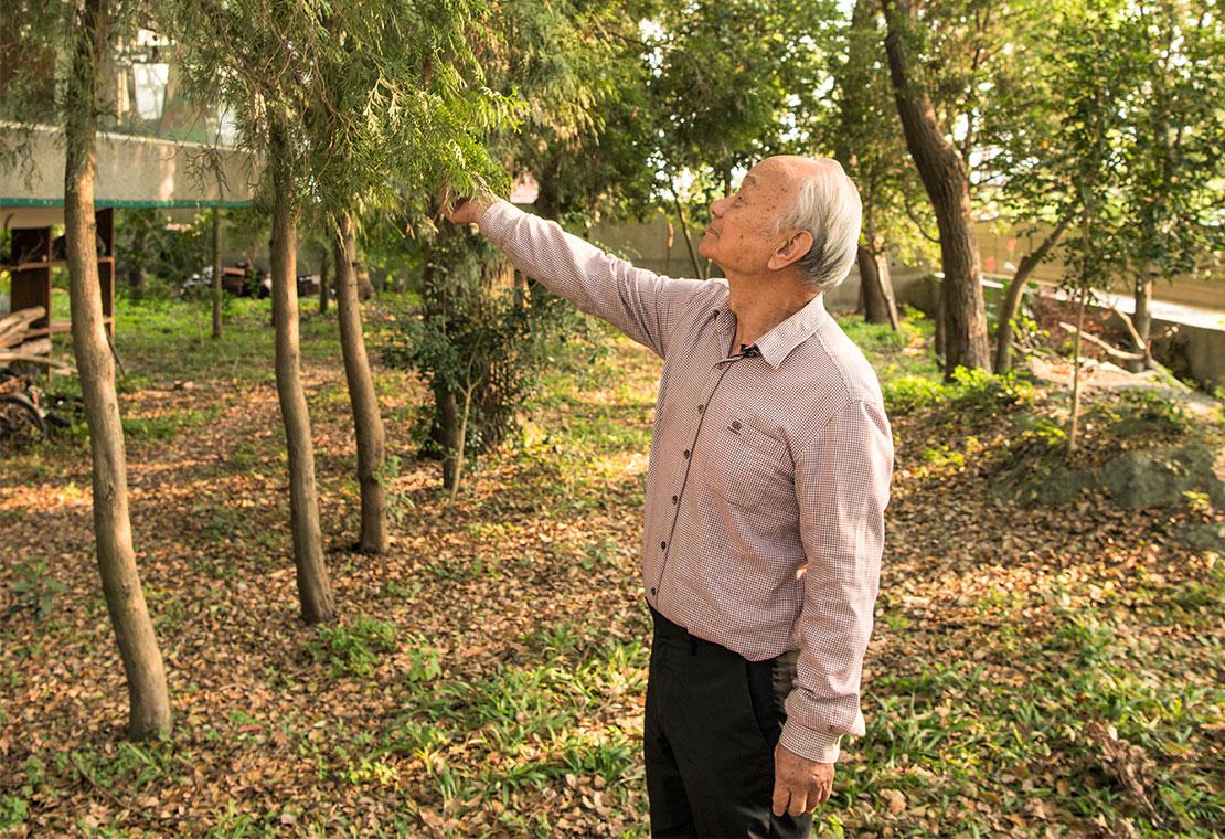 推廣種樹不遺餘力